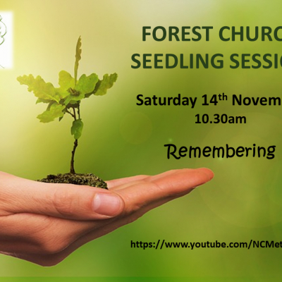 Forest Church Seedling Nov20